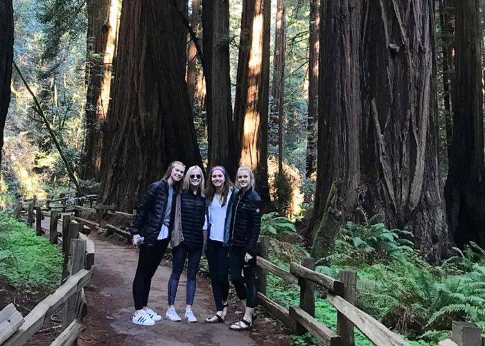 Muir Giant Redwoods and Sausalito Private Group Tour