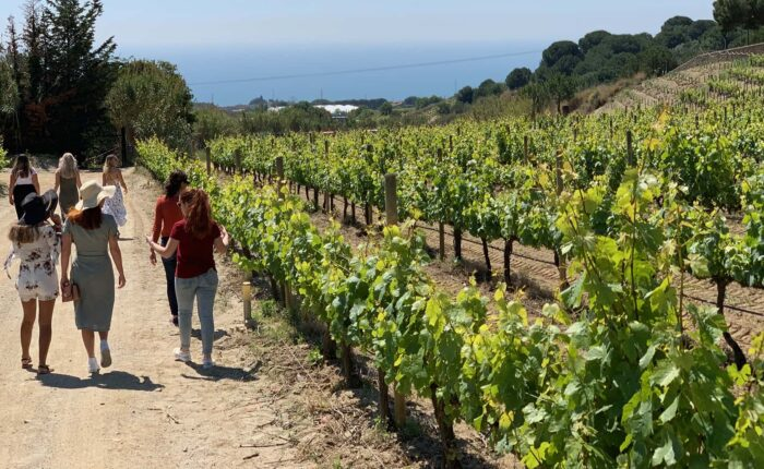 Alella Wine & Food Tour