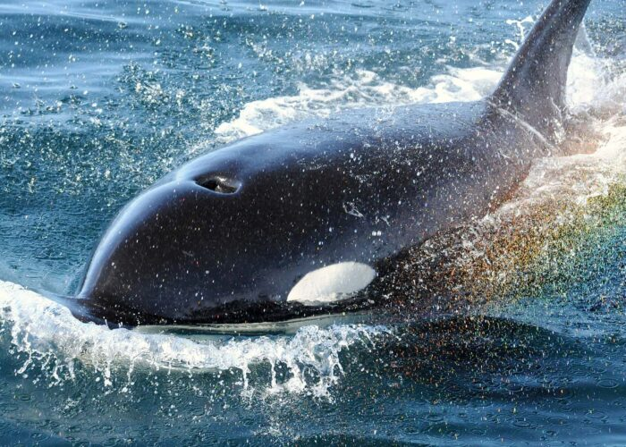 Half Day Whale Watching (Telegraph Cove)