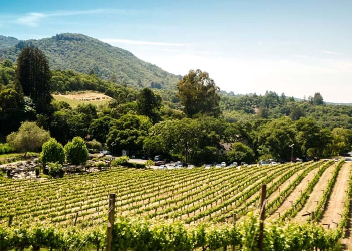 """Our Best Kept Secret"" Sonoma County Wine Tour"