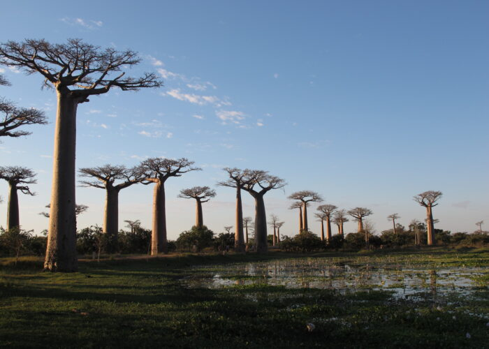 Discover the Unique in Madagascar - Lemurs, Baobabs, Tsingy
